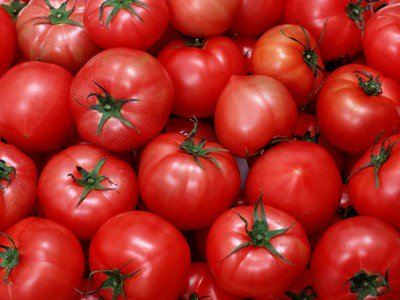 Reclamo de agricultores:- El mercado está inundado de tomates turcos.
