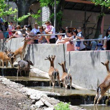 Ocho lamas y otros animales sacrificados en el zoológico de Ereván por un brote de tuberculosis